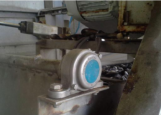 SS 316 Pillow Block bearing used on a conveyor in the mussel processing